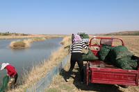 横山水产年度投放3万斤蟹苗