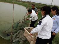 省渔业局检查大荔县水产品质量安全和渔业水域生态环境保护工作